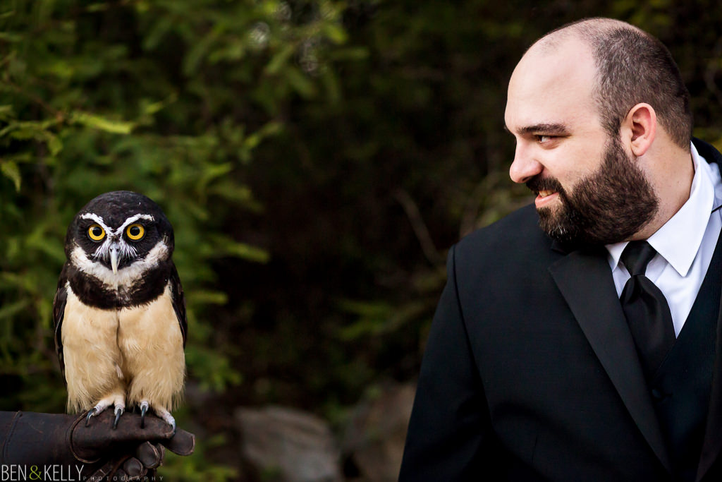 groom and owl at the phoenix zoo - owl - groom - phoenix zoo - weddings - wedding - weddings at the phoenix zoo - phoenix zoo wedding - benandkellyphotography