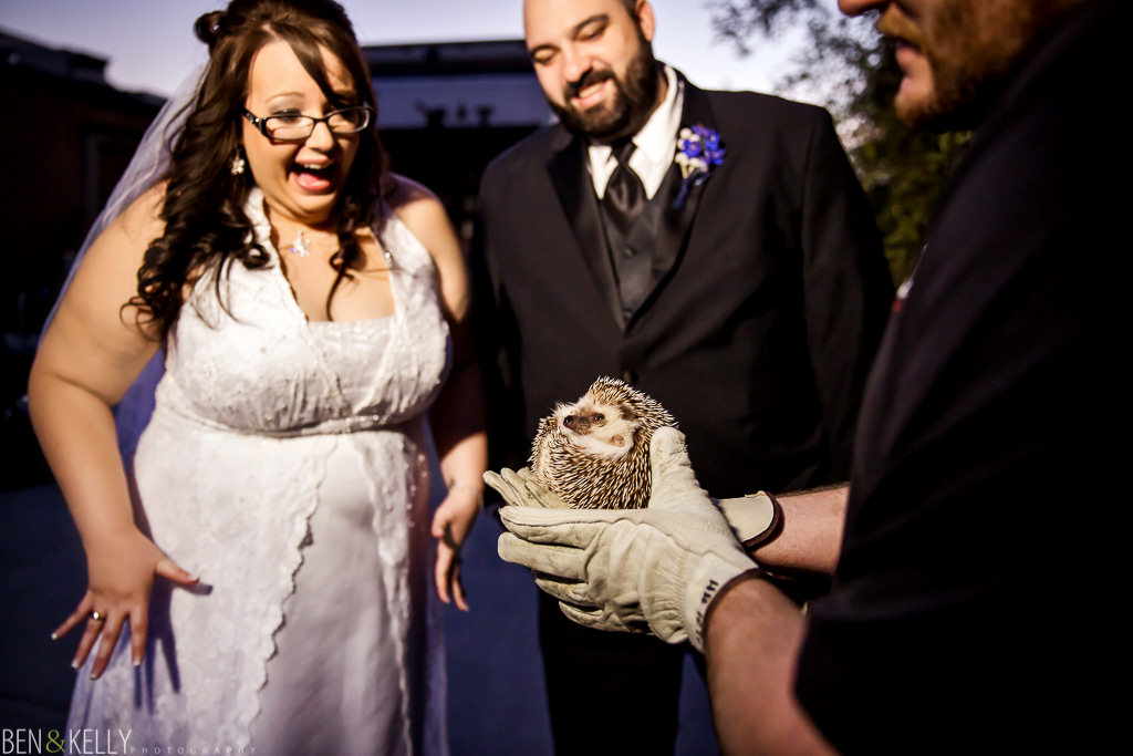 bride and groom and hedgehog at the phoenix zoo - hedgehog - groom - bride - happy - zoo animals - phoenix zoo - weddings - wedding - weddings at the phoenix zoo - phoenix zoo wedding - benandkellyphotography