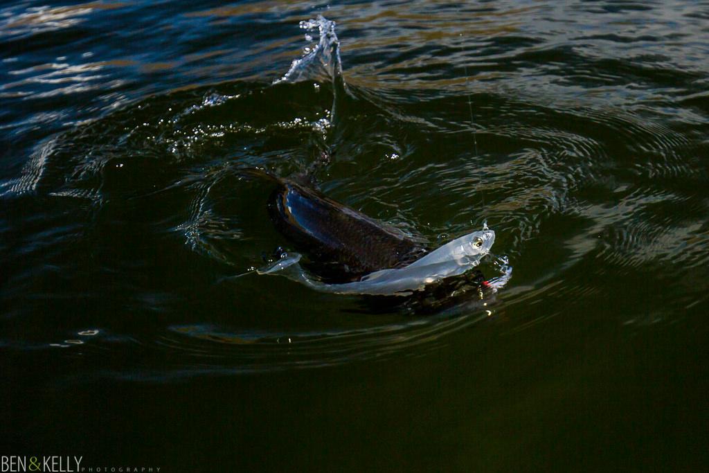 benandkellyphotography-fish-1001